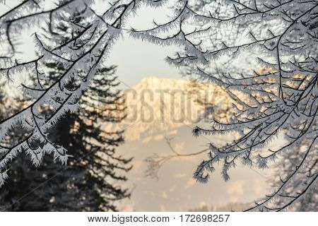 Beautiful ice needles sitting on branches and a wonderful organe illuminated mountain in background.