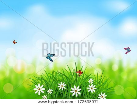 element for design. Green grass with white flowers, butterflies on a  spring, meadow, blurred background