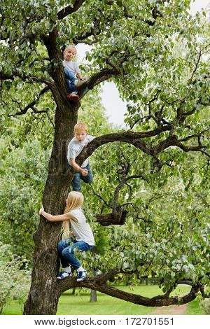 Two girls and boy play, climbing on tree in park.