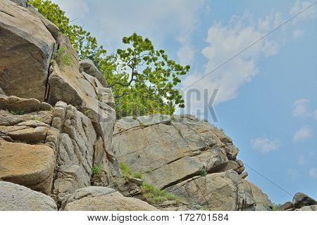 The distorted trees on coastal rocks. Russian Far-East.