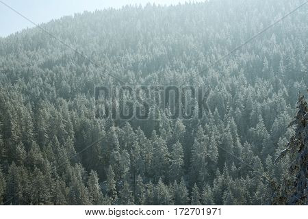 Beautiful view of the sunny winter mountains landscape