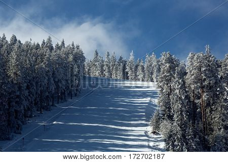downhill skiing going fast down the mountain winter sport background
