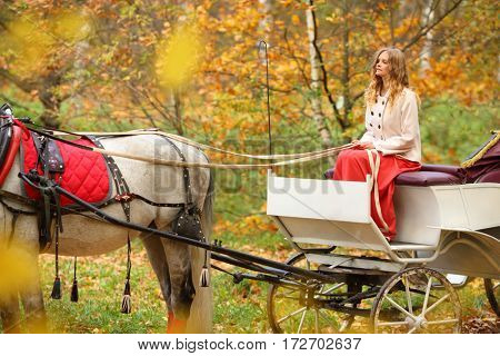 Young woman holding reins in coach with horse in yellow autumn park