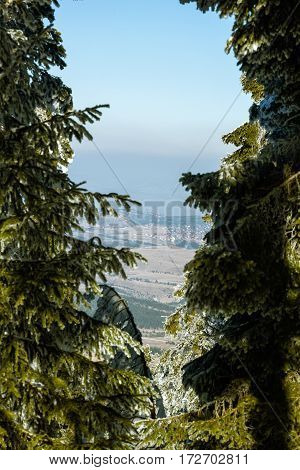 wonderful view: snow mountains pines and landscape nature