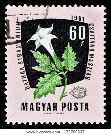 HUNGARY - CIRCA 1961 : Cancelled postage stamp printed by Hungary, that shows Devil Snare.