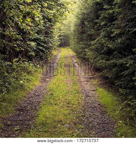 Beaten track or worn path through the warm forest after rain, dark and objectless walkabout, aimless meditative contemplation