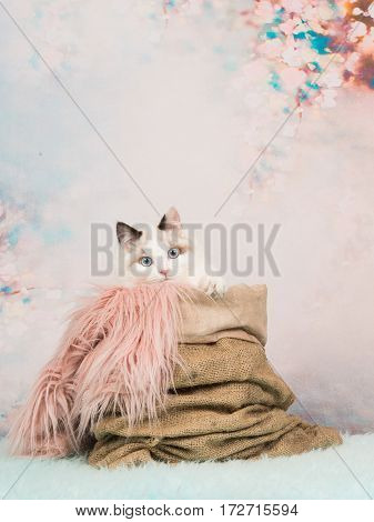 Cute baby cat with blue eyes in a burlap sack on a romantic pastel colored background