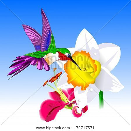 Hummingbird And Flower