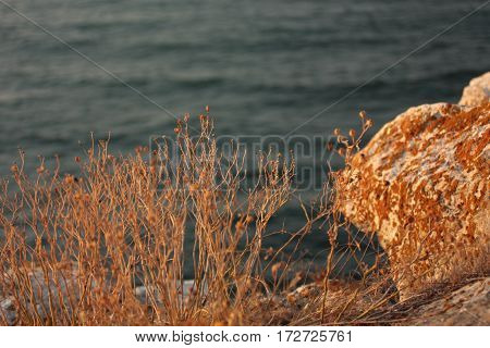 Sea and Grass in Gold Sunset. Colorful and bright