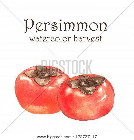 Hand-drawn watercolor illustration of fresh ripe fruits - orange persimmons. Watercolor harvest isolated on the white background