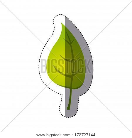 color sticker silhouette with green leaf with stem vector illustration