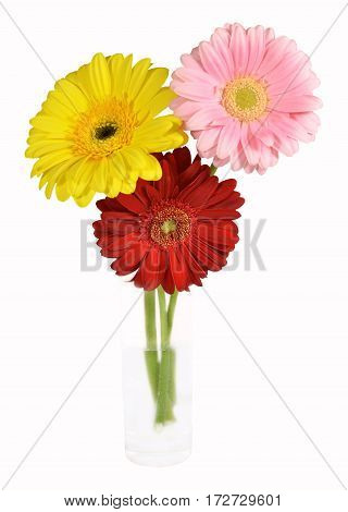 Three colorful gerbera in glass of water. High key. Isolated on white background