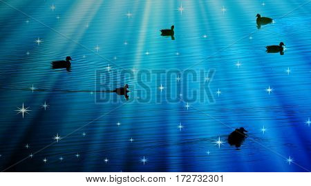 Ducks swimming on pond in blue night light
