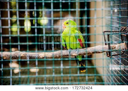 Parrot lovely bird animal and pet in case