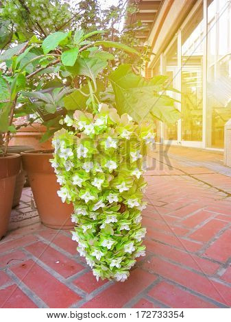 Beautiful Flowers Large Green Canopy And Middle White Beautiful