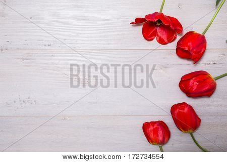 Many red tulips lie on a light wooden background. Spring tulips flowers/ Valentine's Day and Mother's Day. Birthday gift. Flat lay tulips compositions. Floral background