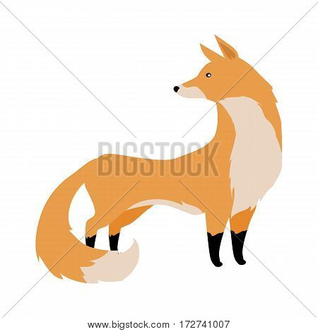 Fox flat style vector. Wild predatory animal. Middle latitudes fauna species. Beautiful red fox cartoon on white background. For nature concepts, children s books illustrating, printing materials