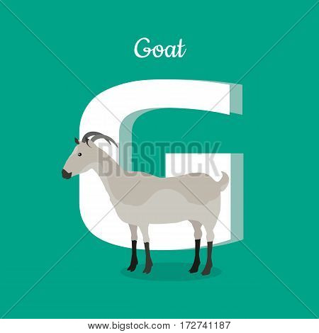 Animal alphabet vector concept. Flat style. Zoo ABC with domestic animal. Grey goat standing on green background, letter G behind. Educational glossary. For children s books, textbooks illustrating