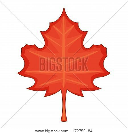 Maple leaf icon. Cartoon illustration of maple leaf vector icon for web