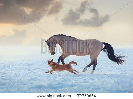 Buckskin stallion play with red dog on sky sunset background