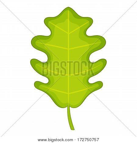 Oak leaf icon. Cartoon illustration of oak leaf vector icon for web