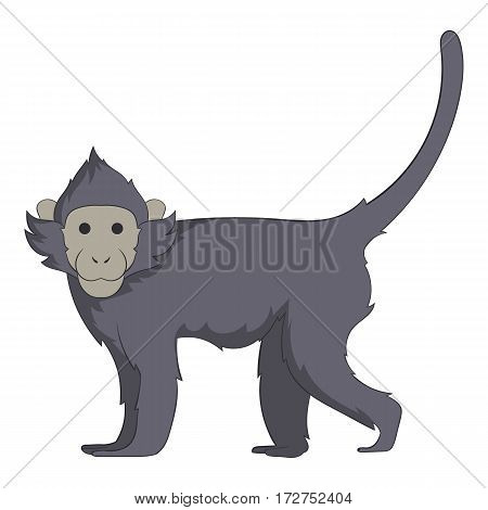 Capuchin icon. Cartoon illustration of capuchin vector icon for web
