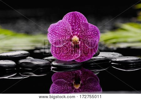 Pink orchid with palm and stones