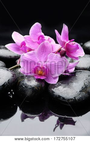 pebbles and bouquet orchid