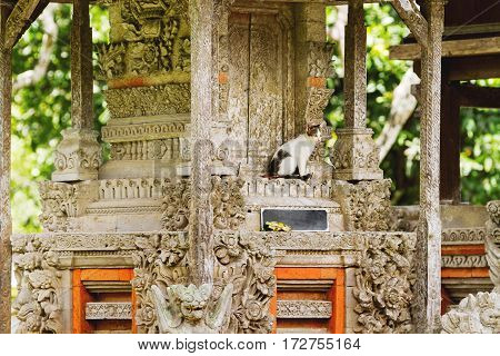 Stray cat in Taman Ayun temple a royal temple of Mengwi Empire. Bali. Indonesia.