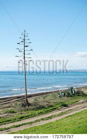 a beautiful seaside landscape taken in Marbella, Spain