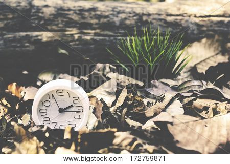 Alarm Clock With Dry Leaves.