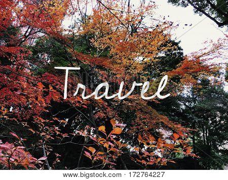 Autumn leaf japan landmark with travel word