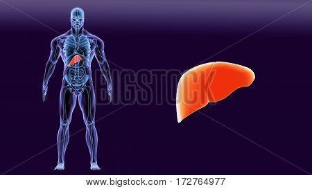 3D illustration of shiny orange Liver - Part of Digestive System anatomy and medical concept.