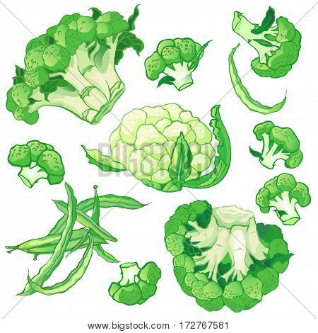Vector vegetables set with broccoli, green string beans and cauliflower