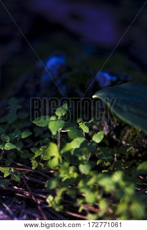 Closeup on green small vegetation shoots with first sun rays on sunrise in forest