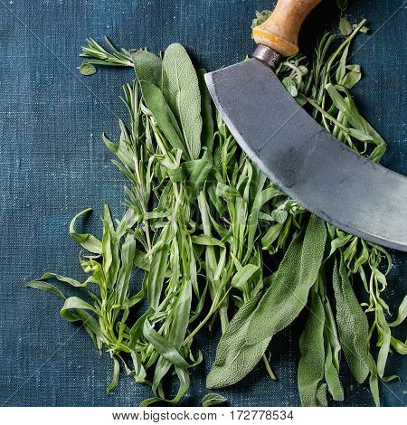 Bundle of fresh Italian herbs rosemary, oregano and sage with vintage herb cutter over dark blue shabby background. Top view with copy space