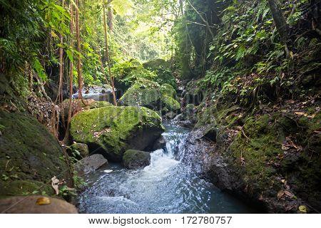 stream at sacred monkey forest, ubud,  Bali,  Indonesia