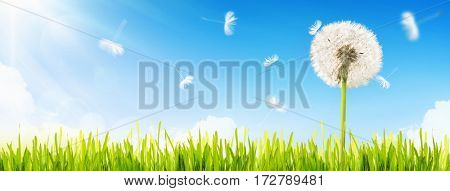 Dandelion and green grass on blue sky background in sunlight