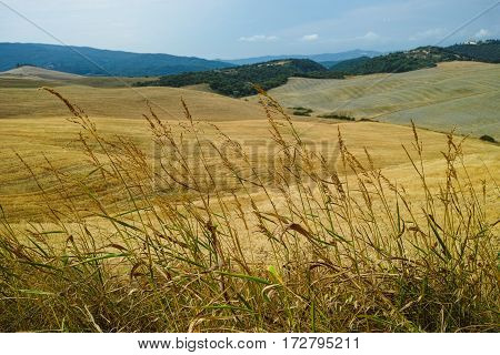 Yellow harvested fields and blue sky in Tuscany Italy