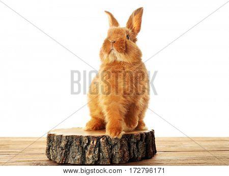Cute fluffy rabbit on stump and white background