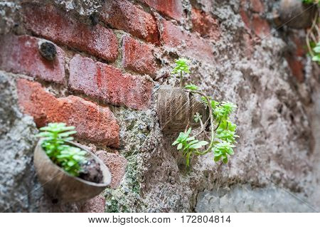 Red brick wall, decorated with coconut pots