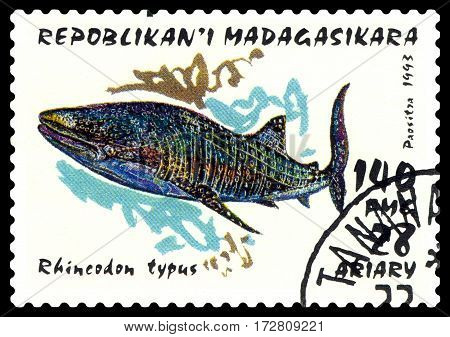STAVROPOL RUSSIA - February 17 2017: a stamp printed by Malagasy shows whale shark (Rhincodon typus) Pelagic Fish circa 1993