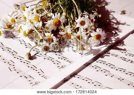 Chamomile bouquet on music sheets background