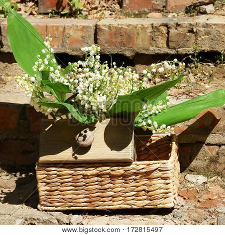 Beautiful lily of the valley in wicker basket on brick wall background