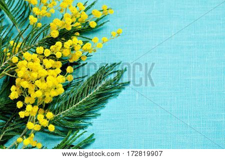 8 March background - mimosa flowers on the turquoise linen surface. 8 March background. 8 March card with free space for text