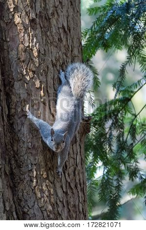 Scoiattolo al Parco di Monza (Squirrel in the park)