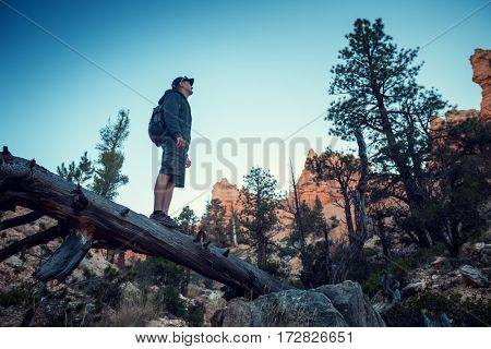 Hiker standing on the dead wood at rocky terrain in the Bryce Canyon, USA