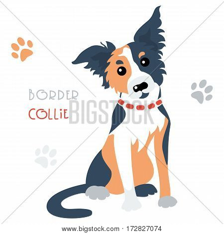 Cute funny tricoloured dog Border Collie breed vector