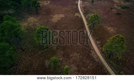 aerial view of dirt track in pind forest in northern of thailand