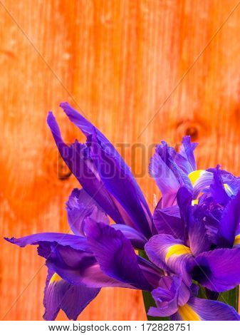 bunch of iris on plywood background portrait orientation